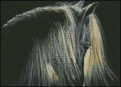 Shaft of Light - Horse
