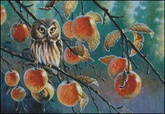 Owl with Apples