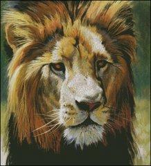 King of the Pride - BM