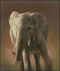 Elephant - RL