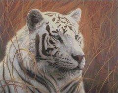 White Tiger Portrait II