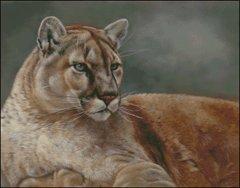 Cougar at Rest