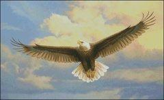 Bald Eagle JN