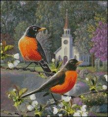 Songbird Robins