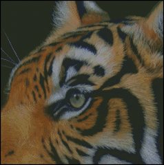 Eye of the Tiger - DS