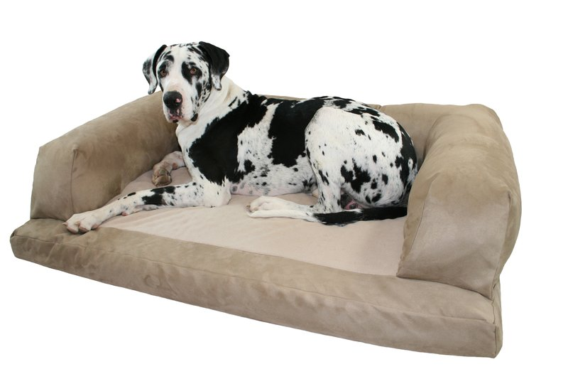 meet jake, our great dane mascot for xxl dog beds | xxl dog beds