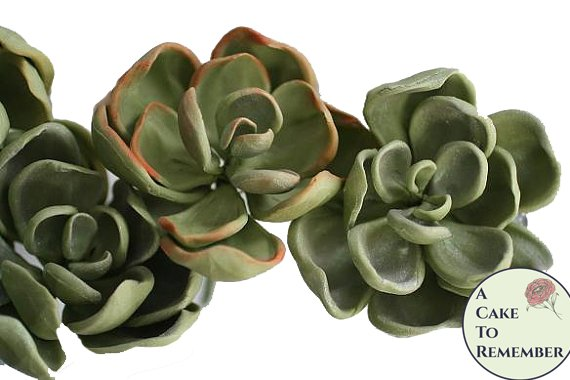 """Three 3"""" wired gumpaste succulents with rounded tips for cake decorating, wedding cake toppers, or DIY wedding cakes"""