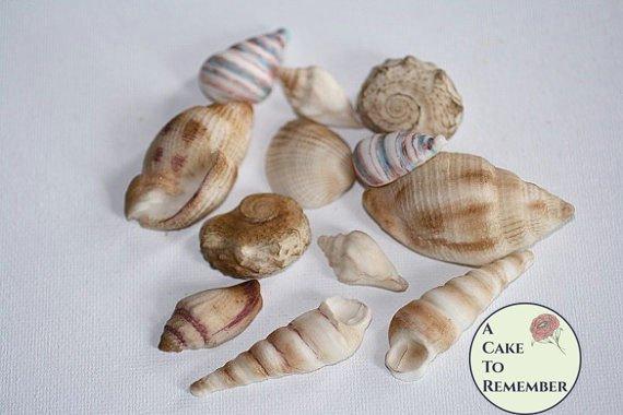 Gumpaste sea shells for cake decorating, edible sea shells