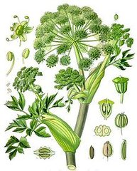 Angelica Seed