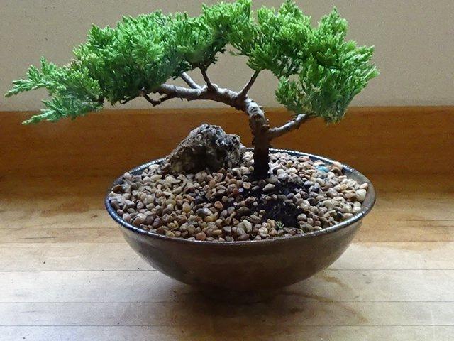 Bonsai Trees On Sale | Bonsai Delivered  Bonsai On Sale