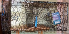 "JOY FISH BLUE CRAB TRAP LO BOY VINYL COATED L24"" x W24"" x H11"" ENTRANCE 4 SIDES"