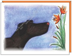 Lily Dog Boxed Note Cards