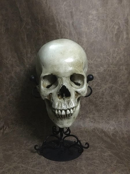 Female Real Human Skull Replica Realistic Real Human Skull