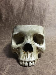 Food Safe Female Real Human Skull Replica Bowl Skull Chalice by Zane Wylie