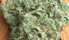 PR Gucci 28.11% THC Pre Packaged 1/8th