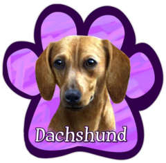 Doxie Car Magnet I