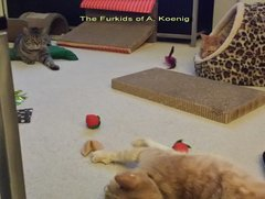 3 Organic Catnip Fortune Cookies