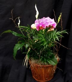 Deluxe Single Orchid Gift Basket