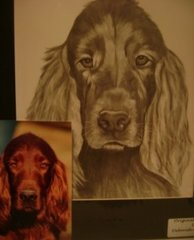 Pencil Drawn Pet Portraits