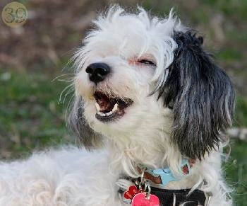 Adoption Fee for Dogs 8 Years of Age and Older