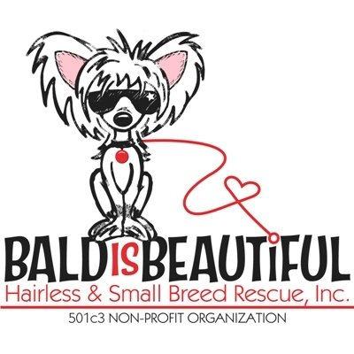 Bald is Beautiful Hairless and Small Breed Dog Rescue Shopping