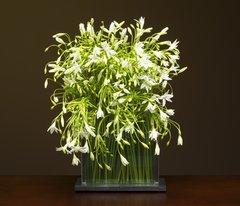 "STEMS Flower Vase 6"" Wide 4"" Tall"