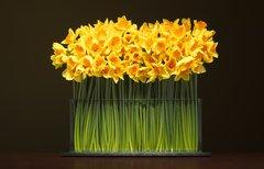 "STEMS Flower Vase 15"" Wide 6"" Tall"