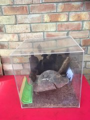 British soldiers helmet recovered from Dunkirk beach in perspex display case with sand and wood from the Beach a very nice rare relic from the famous pocket in 1940 and the battle of France