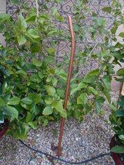 Copper Flower Stem (optional)