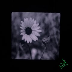 "4"" X 4"" Black and White Daisy Aluminum"