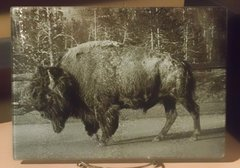 "8"" X 11"" B&W Frac Bison Glass Cutting Board"