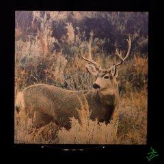 "8"" X 8"" Mule Buck 2 Wood Photo"