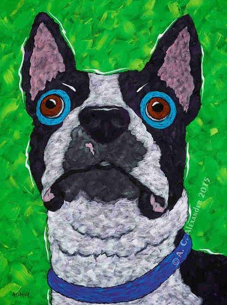 Drop It! - Boston Terrier