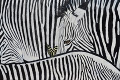 """zebra """"Patterns in Nature"""" African Zimbabwe zebras and Florida's state butterfly, the zebra butterfly of course"""