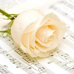 Everyday Classic Rose