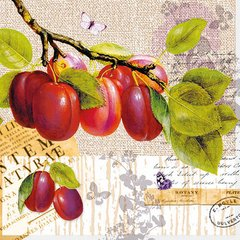 Everyday/Fall-Botany Plum