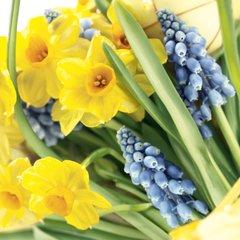 Spring - Spring Time