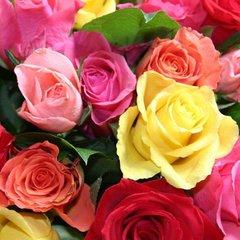 """Design Edition Roses"""