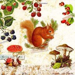 Fall-Squirrel