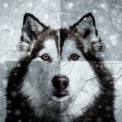 X-mas Husky
