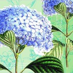 Spring - Hydrangea