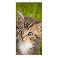 """Little Cat"""