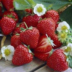 Everyday Strawberry
