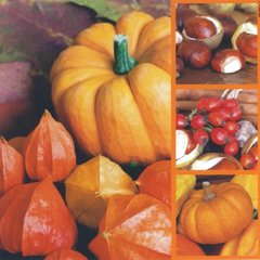 Fall-Courge