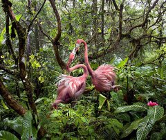 Pat Swain, Archival Luster Photo Print, Tw Lost Flamingo Find Love in the Jungle