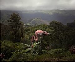 Pat Swain, Archival Luster Photo Print, A Lost Flamingo Curious about a Flower