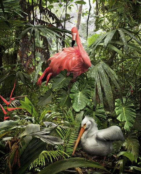 Pat Swain, Archival Luster Photo Print, A Lost Flamingo and a Lost Pelican