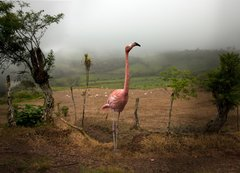 Pat Swain, Archival Luster Photo Print, A Lost Flamingo Blends in with the Land