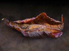 "Susan Oakes, Copperleaf 2, Enhanced Digital Photo/Painting, 18"" x 24"""