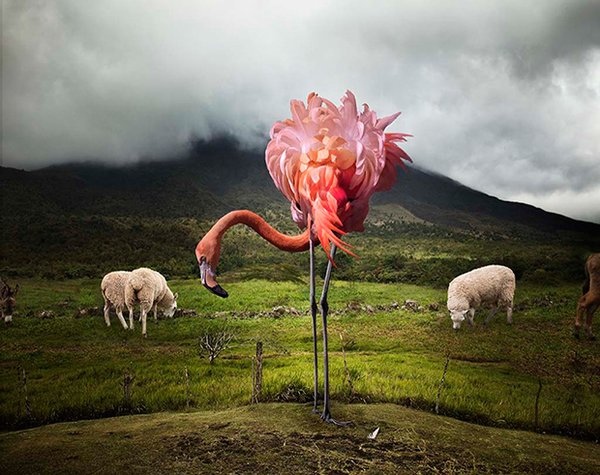 Pat Swain, Archival Luster Photo Print, A Lost Flamingo in High Elevation